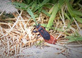 West Coast Bugs life