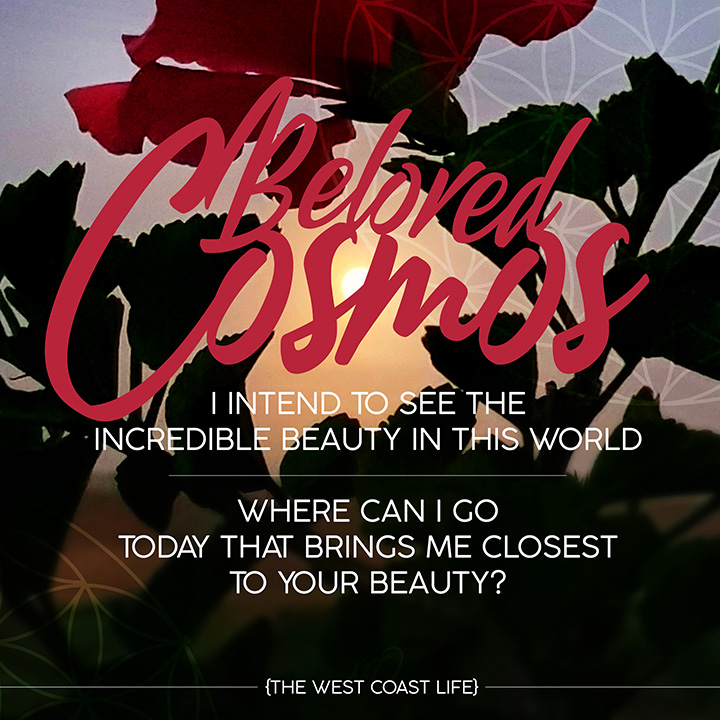 Beloved Cosmos I intend to see the beauty in this world